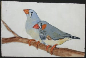 Painting of a Pair of Zebra Finches by Amy Morrissey